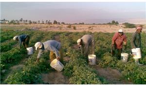 مزارعون يهددون بالتصعيد ضد وقف استقدام العمالة الوافدة
